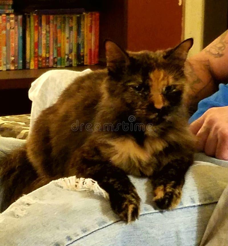 Кот Chillaxed стоковые фото