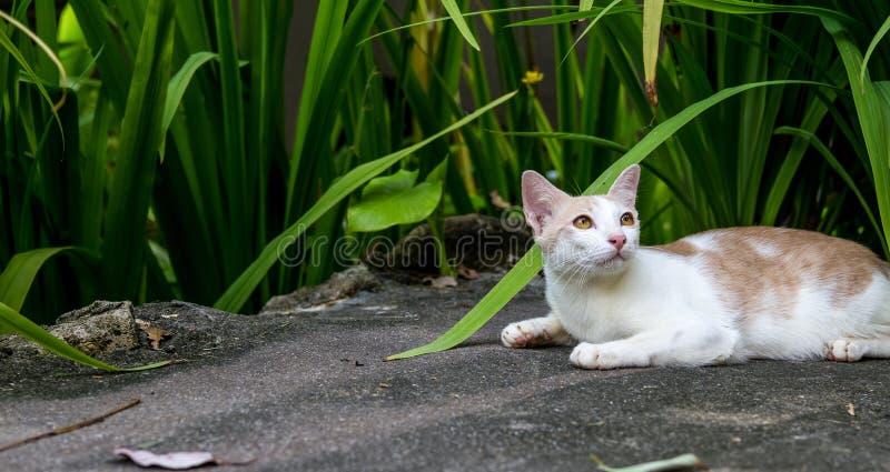 Кот Ferral на курортном отеле в Таиланде стоковые изображения rf