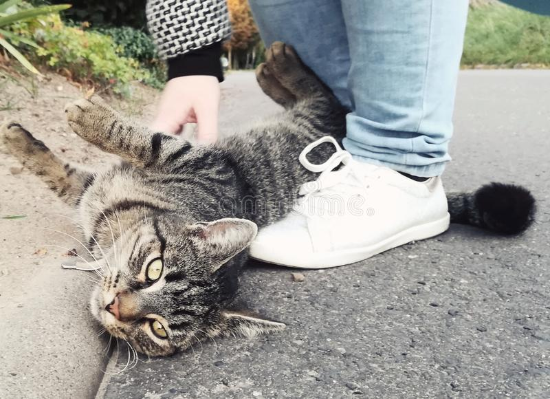 Кот Lovley стоковое изображение rf