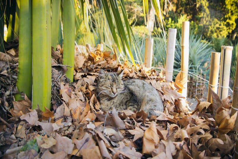 Кот napping в саде стоковая фотография rf