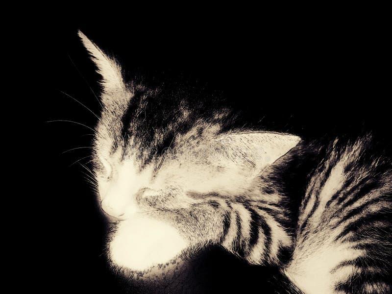 Кот Nega стоковые фотографии rf