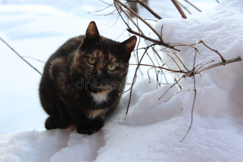 Кот oh снег стоковые изображения