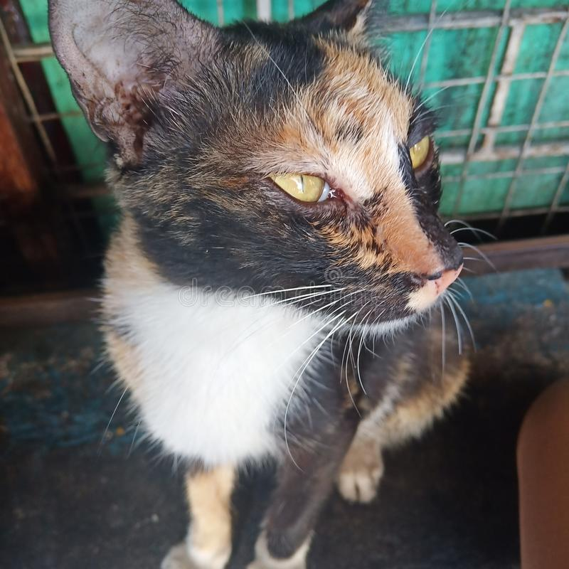 Кот Pussy стоковые изображения rf