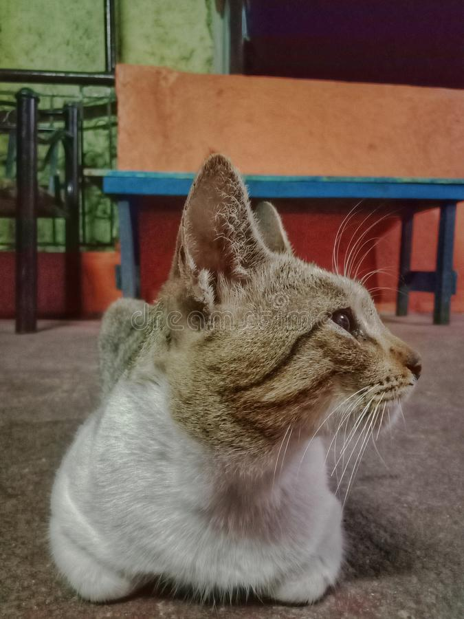 Кот Sideview стоковые изображения rf