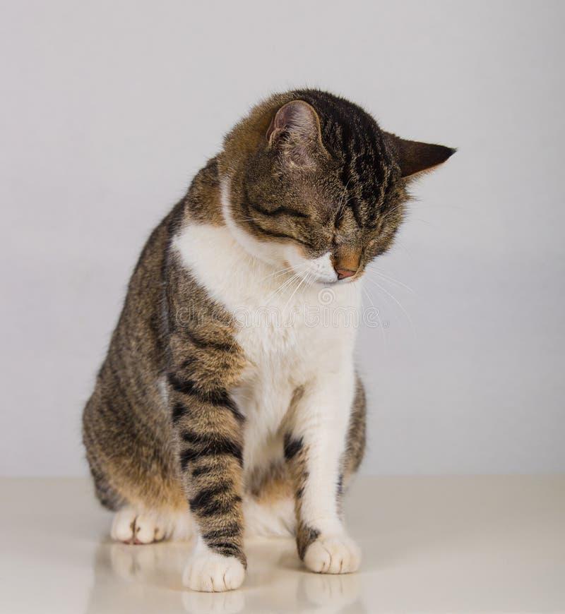 Кот spleeping стоковое фото rf