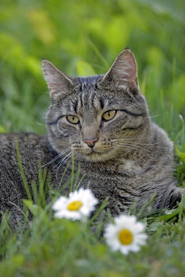 Кот Tabby в траве стоковые фотографии rf