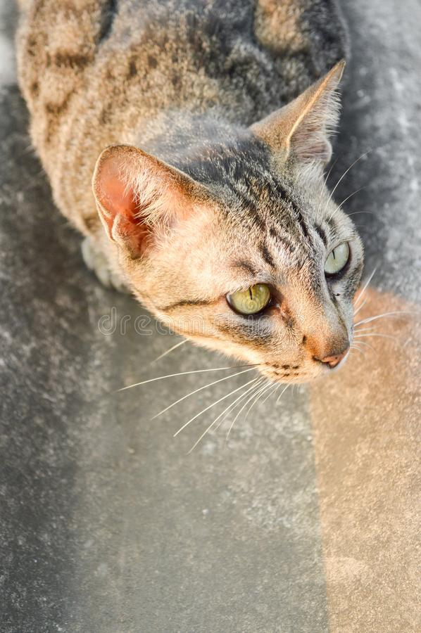 Кот Tabby на крыше плитки стоковая фотография rf
