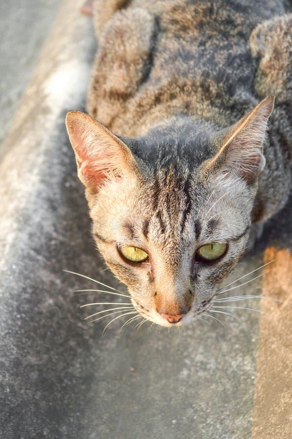 Кот Tabby на крыше плитки стоковое изображение rf
