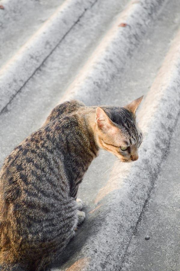 Кот Tabby на крыше плитки стоковые изображения rf