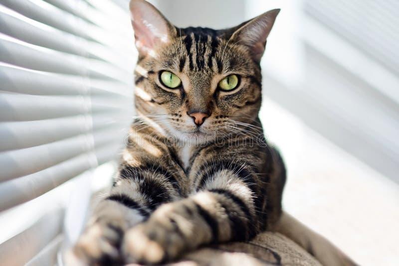 Кот Tabby на тренере стоковые фотографии rf