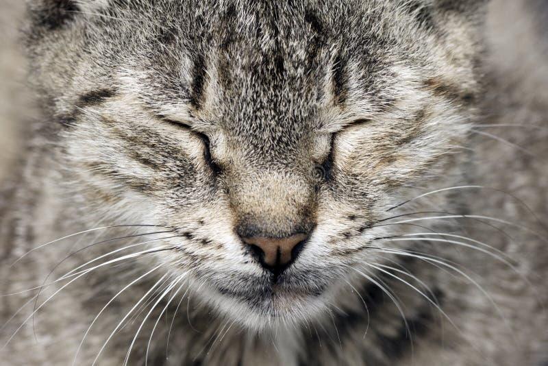 Кот tabby спать стоковое изображение