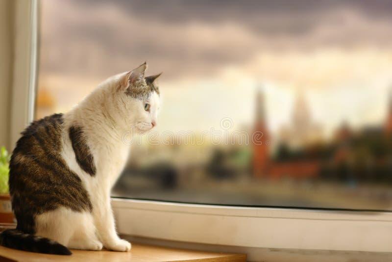 Кот Tom почты сидит на взгляде windowsill через падение дождя окна стоковые фото