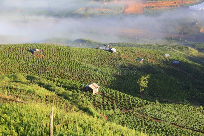 Кофейная плантация стоковые изображения rf