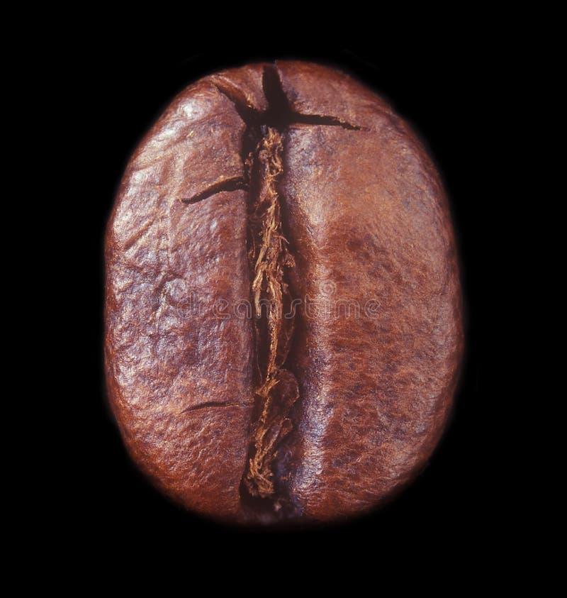 Кофейное зерно.