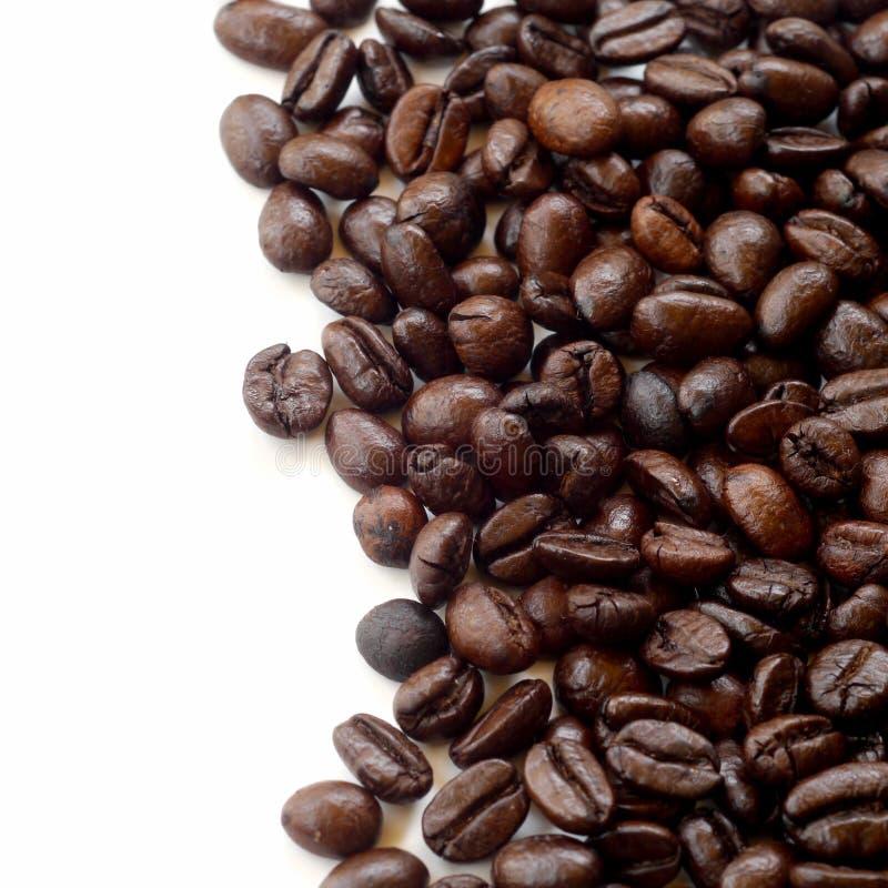 Кофейные зерна Брайна изолированные на белизне стоковое изображение