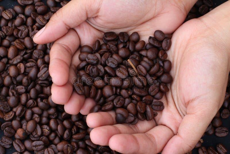 Кофейные зерна на руках стоковое изображение rf