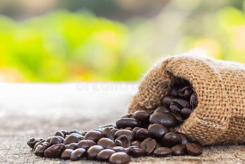 Кофейные зерна политые от мешка стоковое изображение