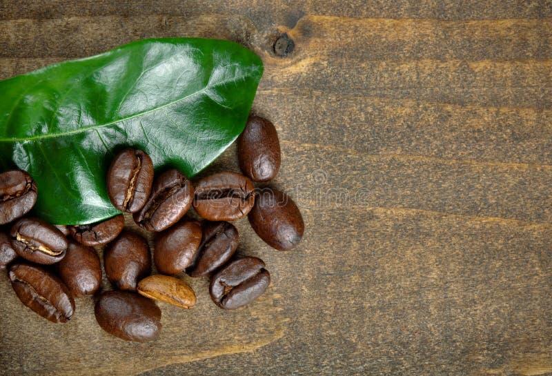 Кофейные зерна с лист стоковая фотография rf