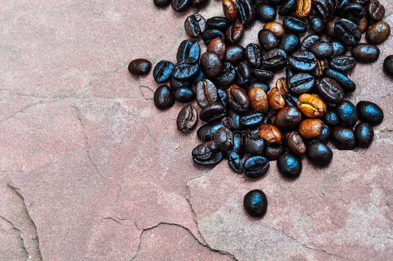 Кофейные зерна Стоковые Изображения RF