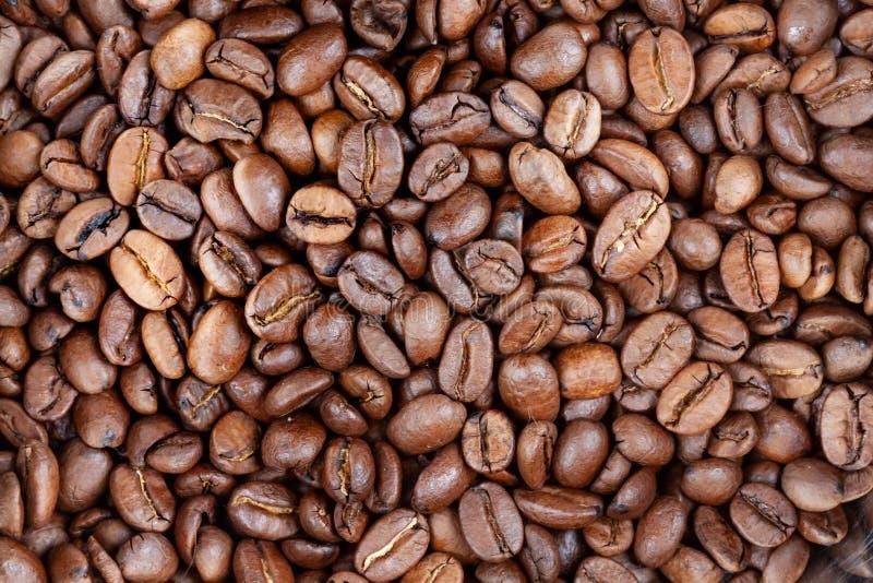 Кофе-бобы стоковые изображения rf