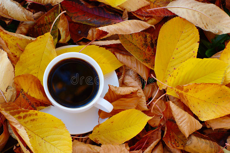 Кофе в листьях осени стоковая фотография rf