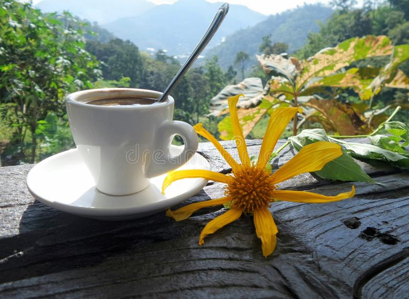 Кофе утра с солнцецветом Maxican в долине стоковые фото