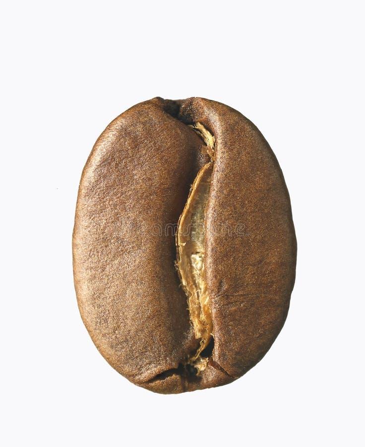 кофе фасоли одиночный стоковые изображения