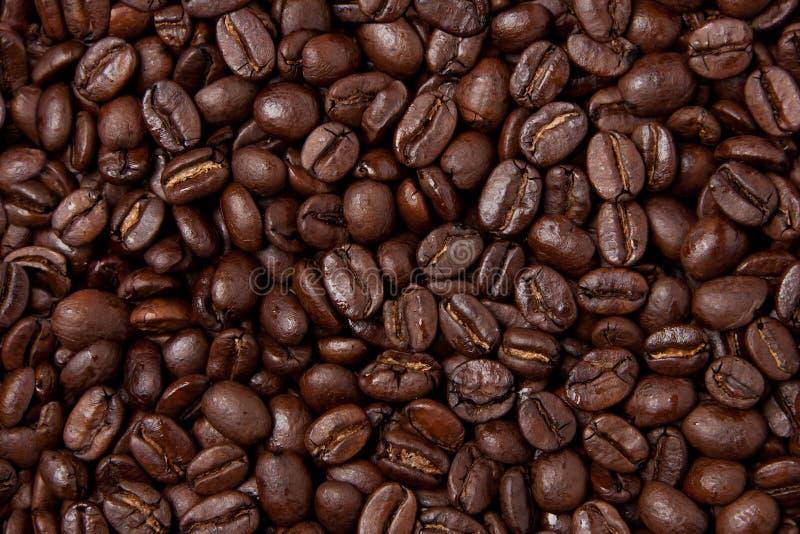 кофе фасоли предпосылки безшовный стоковые изображения