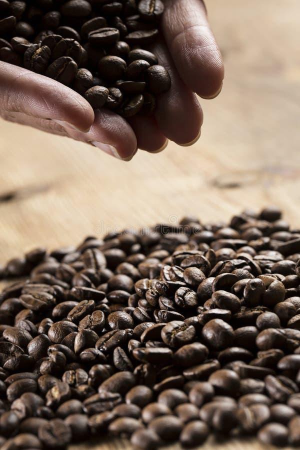 кофе фасолей вручает удерживание стоковое изображение rf