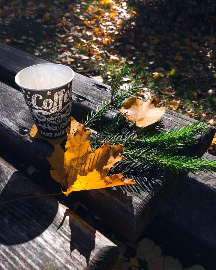 Кофе, autumm, солнце стоковая фотография