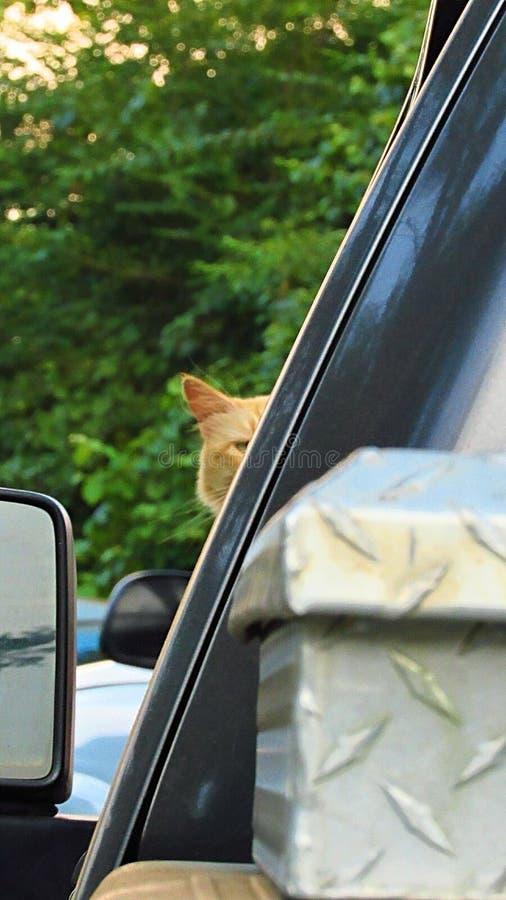 Кошка, глядя за углом, смотрит на камеру стоковое фото