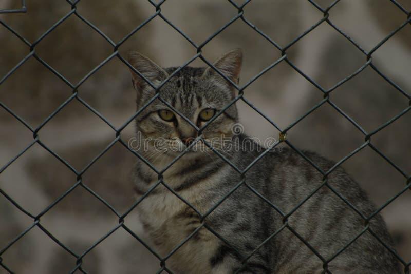 Кошка следит за тобой стоковое фото rf