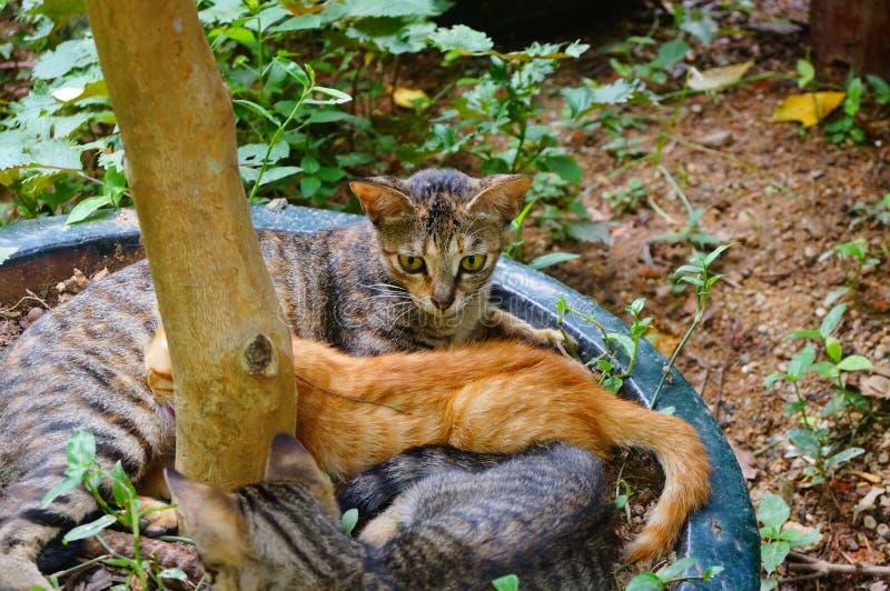 Кошки стоковые изображения rf