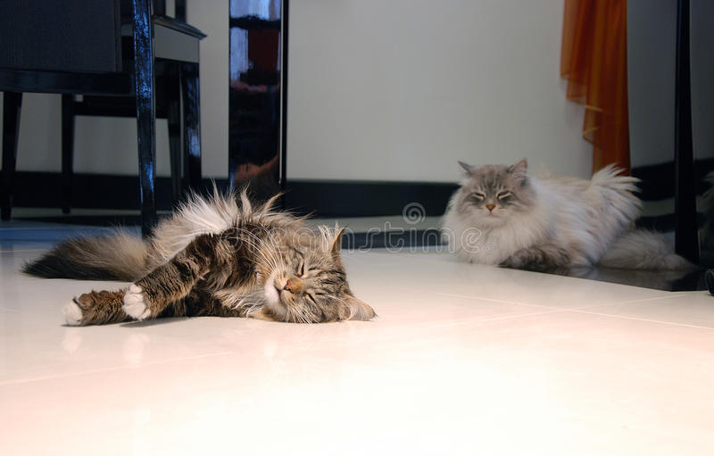 Кошки стоковые изображения