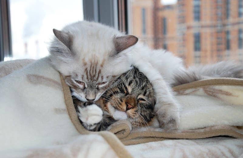 Кошки стоковое изображение rf