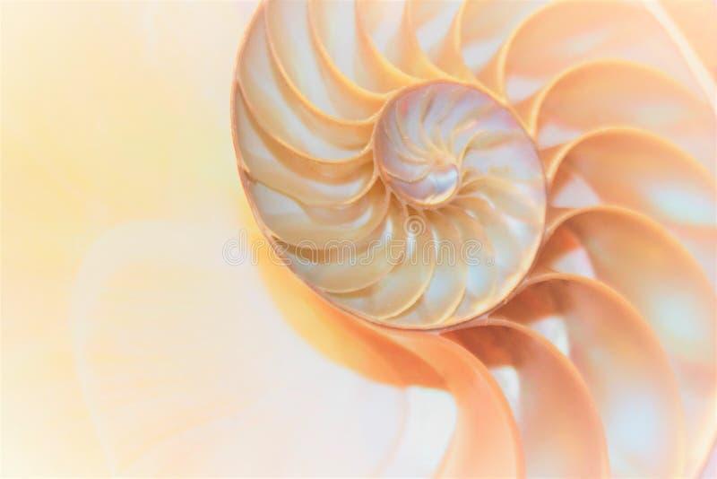 Коэффициент роста структуры спирали поперечного сечения симметрии Фибоначчи раковины Nautilus золотой стоковые изображения rf