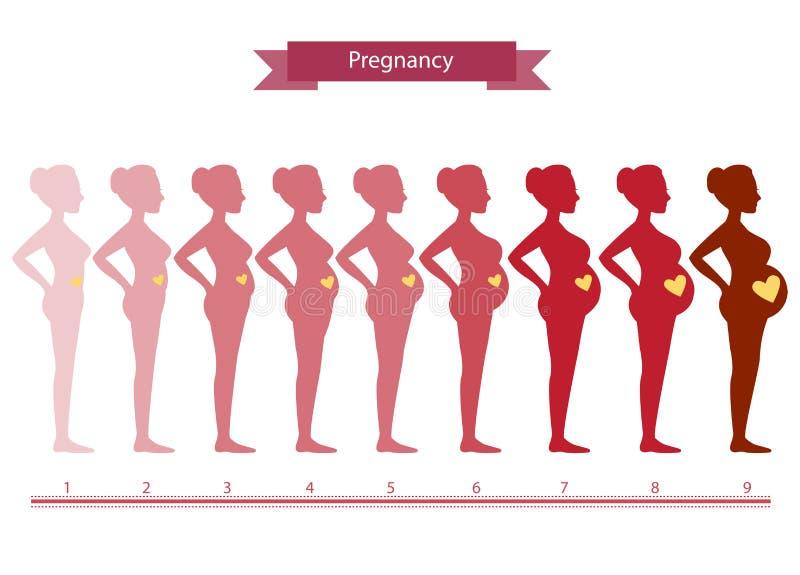 Коллаж женщины в этапах на белизне, иллюстрациях беременности иллюстрация вектора