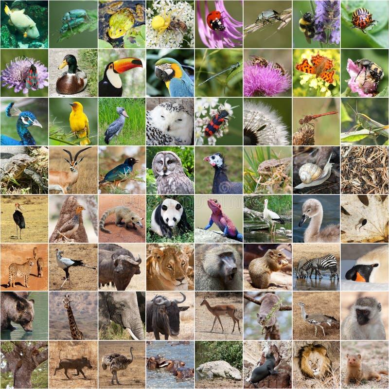 вместе добивались фотоколлаж на тему животный мир лук беспроигрышный вариант
