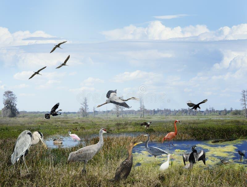 Коллаж заболоченных мест Флориды стоковые фотографии rf