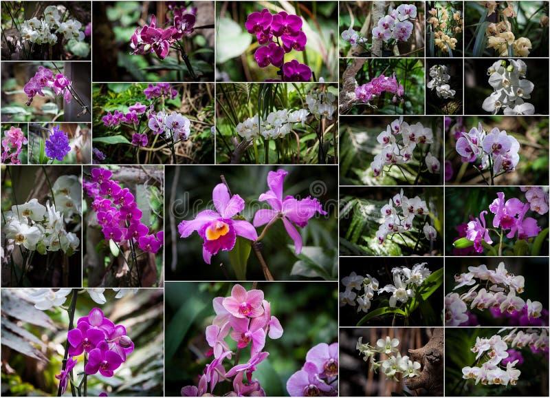 Коллаж орхидей стоковое фото rf