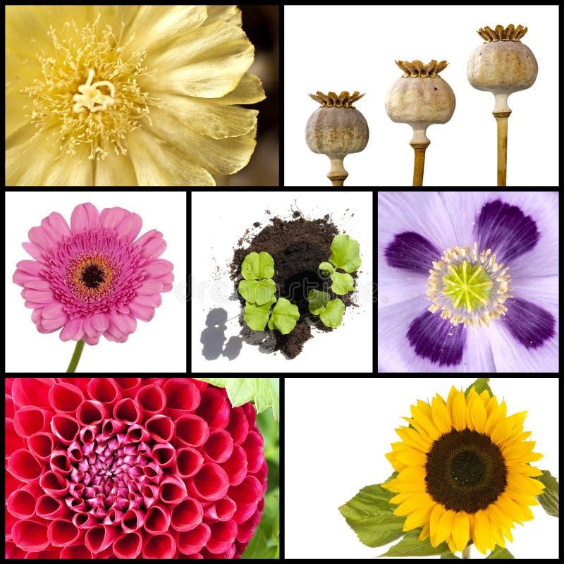 Коллаж цветков в квадратах стоковые изображения