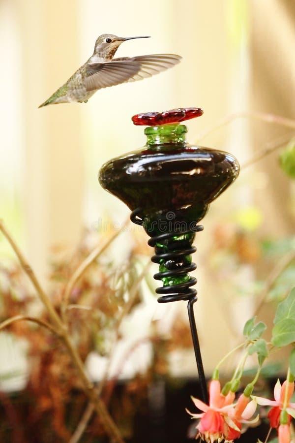Колибри причаливая фидеру птицы стоковые фотографии rf