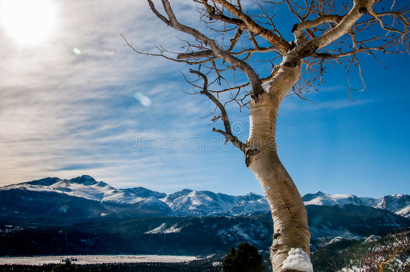 Колорадо Aspen стоковая фотография