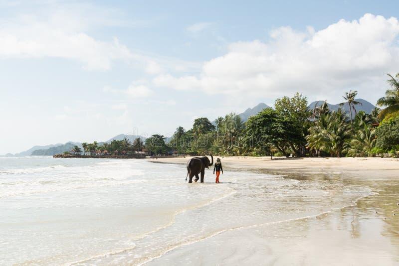 Ко Чанг, Таиланд - июнь 2019 года: Таиландец ходит по слону на песчаном Лон стоковые изображения