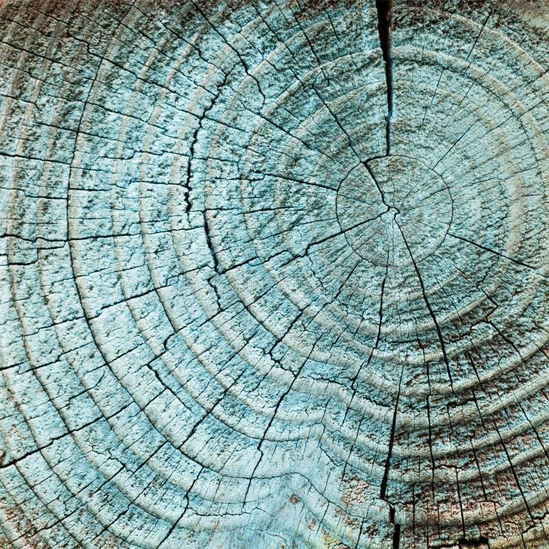 Кольца древесины дерева стоковое изображение rf