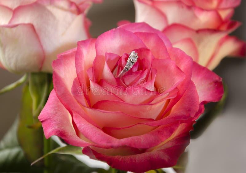 Кольцо в розовом цветке стоковые фотографии rf