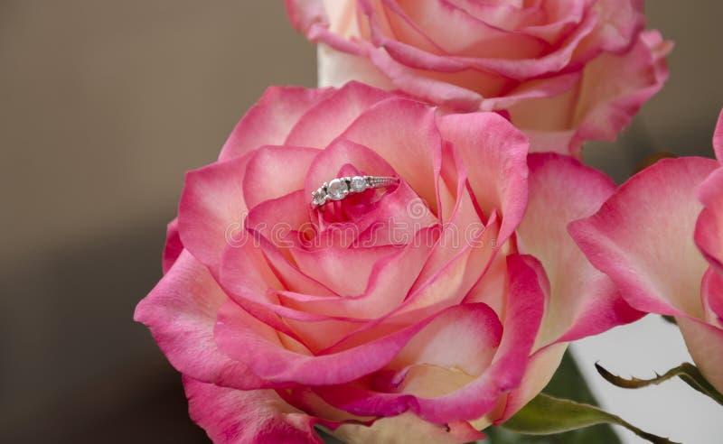 Кольцо в розовом цветке стоковое фото rf