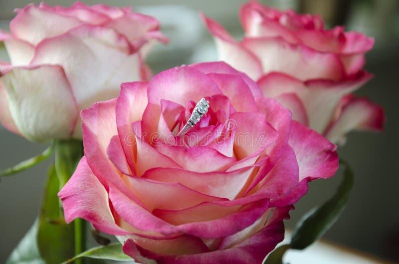 Кольцо в цветке, яркая подняло стоковая фотография