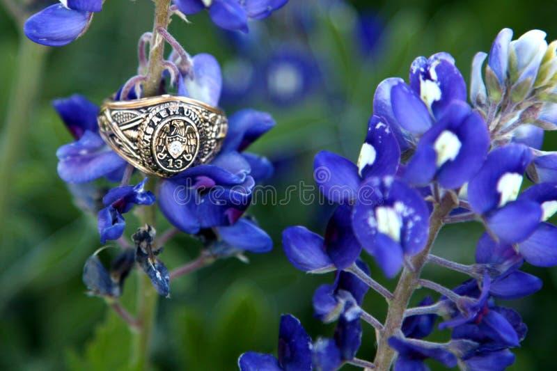 Кольцо класса золота с Bluebonnets стоковая фотография