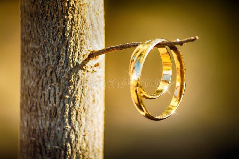 Кольцо снятое на хворостине стоковое изображение rf